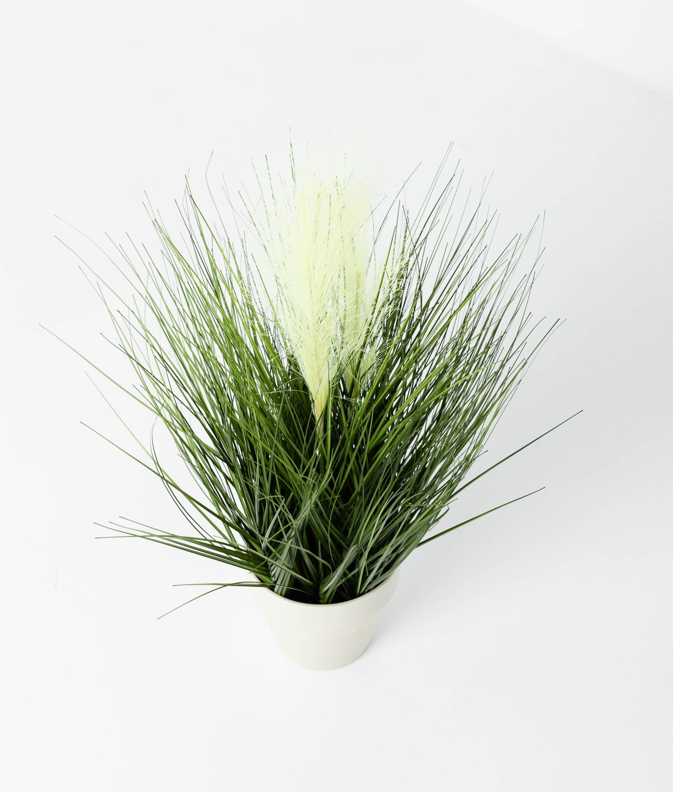 PLANTA MONA - ESPIGA