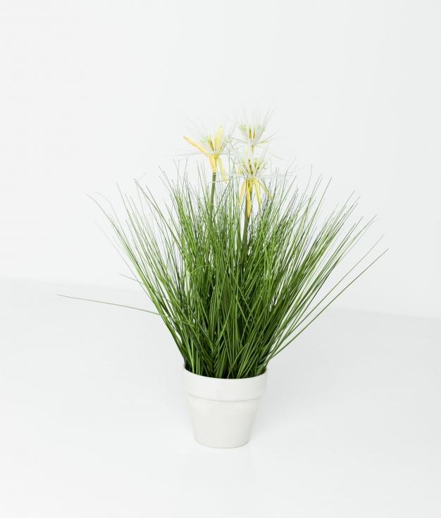 PLANTA MONA - FLOR